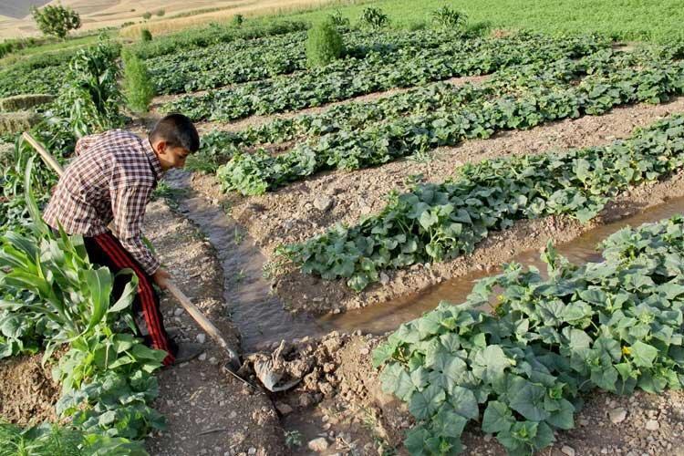 سایه سنگین کشاورزی سنتی بر دشت قزوین