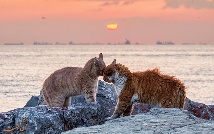 دقایقی با گربه های بامزه استانبول