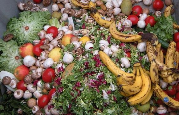 عوامل خسارت زا سالانه 40 درصد غذای تولیدی کشور را نابود می نمایند