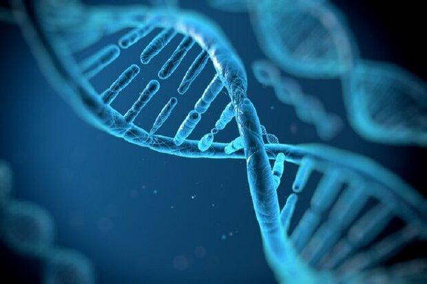 سلول های نوترکیب ایران ساخت به کمک صنعت ژنتیک آمد